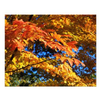Stunning Autumn Leaves on Trees Photo Poster