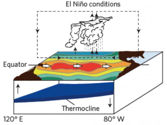 Durante un El Niño, gli alisei si indeboliscono e cambiare oceaniche modelli di circolazione.  Image credit: Michael McPhaden / NOAA