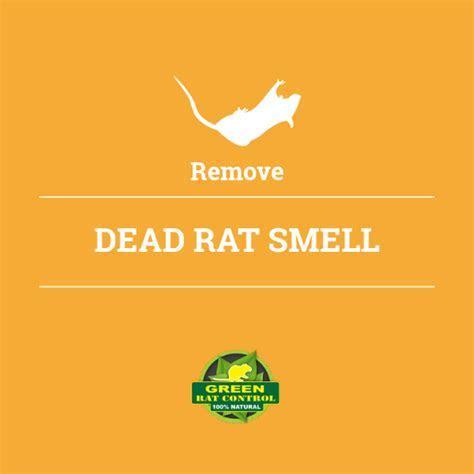 Remove Dead Rat Smell   Green Rat Control & Attic Cleaning Company