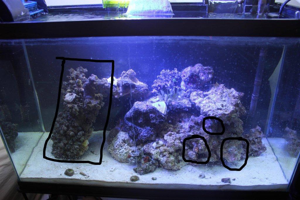 Aquascape Ideas Reef Aquarium Aquascaping