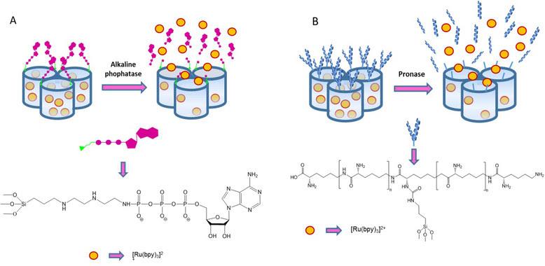 <p>Diseño de las puertas moleculares que, en ausencia del estímulo, bloquean la entrada de los poros e impiden la salida de las sustancias almacenadas en su interior. Cuando el estímulo está presente, la puerta molecular se rompe, permitiendo la liberación de la sustancia al exterior. / UPV</p>