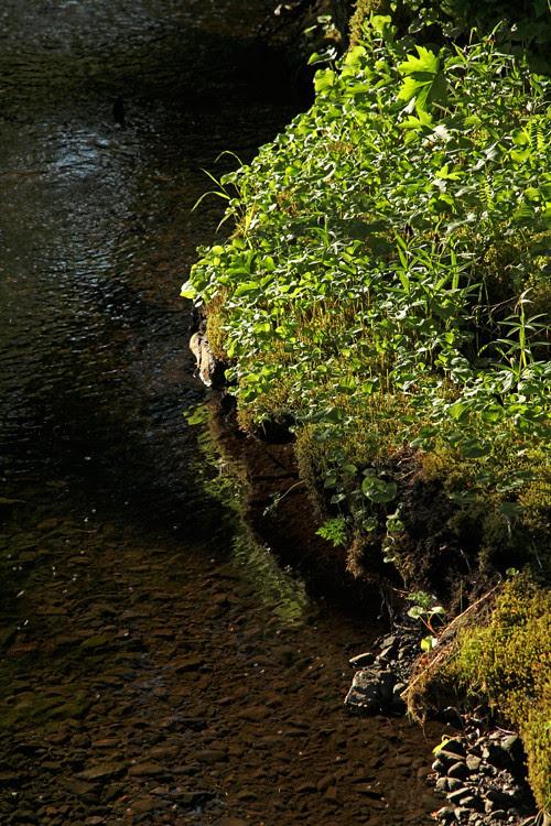 sunlight on the bank of Son-i-Hat Creek, Kasaan, Alaska