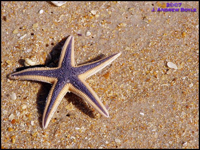 Armored Star