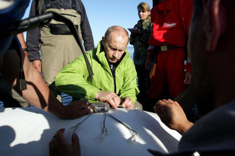 Russian President attaches to machok beluga Dasha during his visit to the island Chkalov 700 km northeast of Khabarovsk, July 31, 2009.
