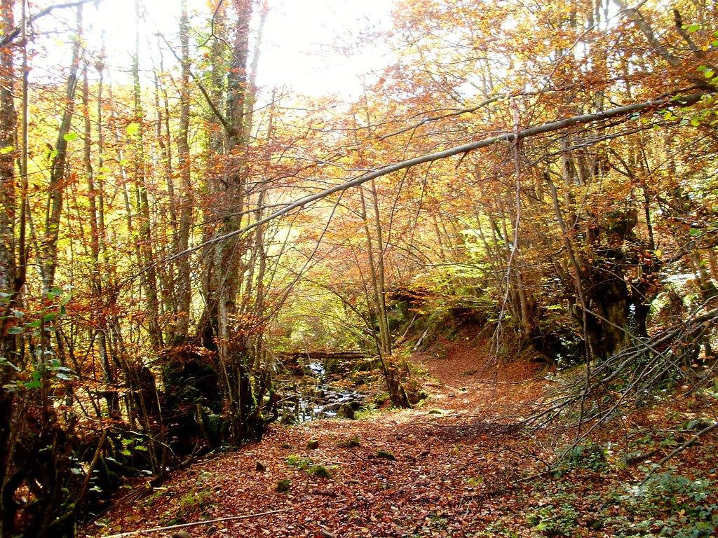 Bosque de Lindes 014
