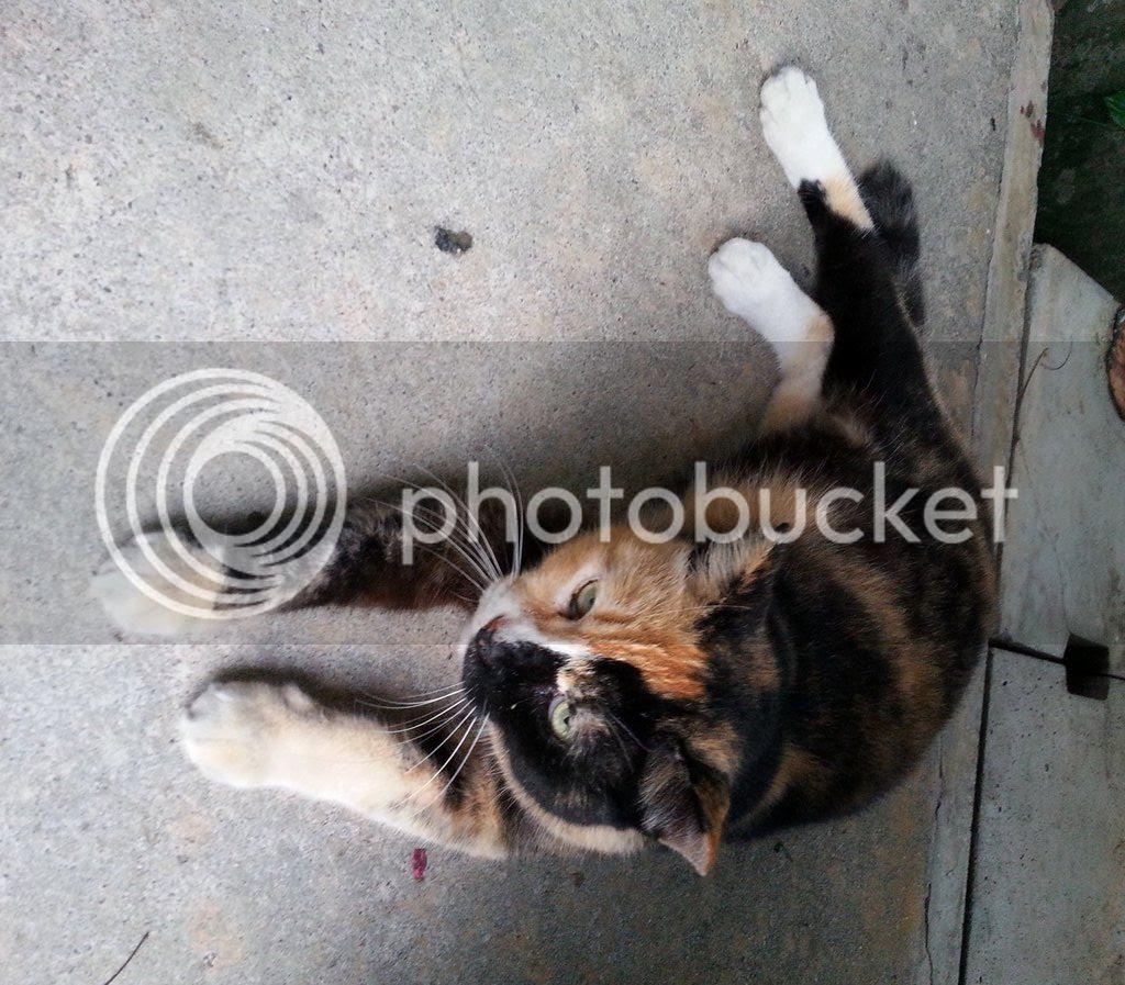 photo CatJRT14Aug01.jpg