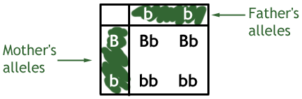 IGCSE Biology  318 describe patterns of monohybrid