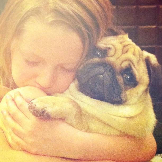 Love. #ollie_the_pug #love @mexturesapp #mexturesapp #pug #agirlandherdog #curlytailgang #hug #pugsofinstagram #fogsofinstagram #pugstagram @the_naughty_pug