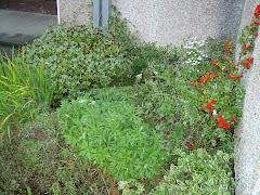 School Garden in Autumm