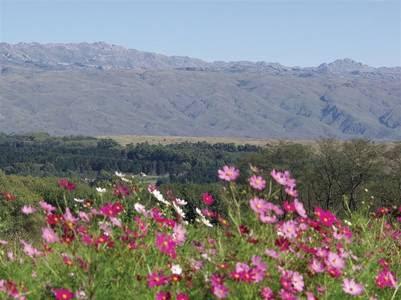 En primavera comienza a florecer el valle.