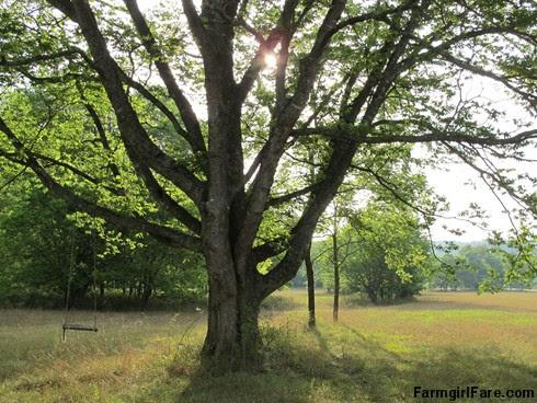 (19-5) Homemade swing in the hayfield - FarmgirlFare.com