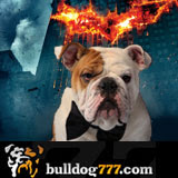 Bulldog777 gives The Dark Knight Video Slot Two Paws Up