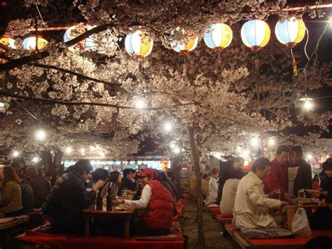 The Best Hanami (Cherry Blossom Viewing) Spots in Kyoto