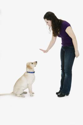 Maintain eye contact with the dog when giving it commands.