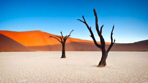 Image result for Namib-Naukluft National Park, Namibia