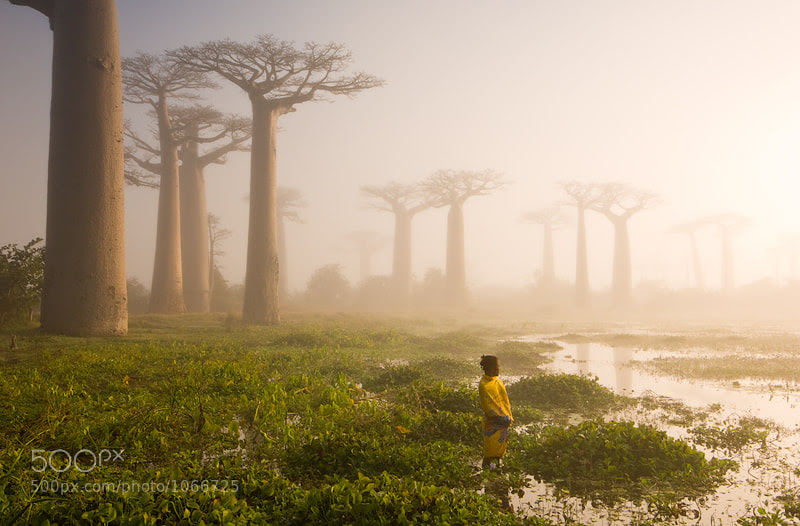 The Swamp by Marsel van Oosten (MarselvanOosten) on 500px.com