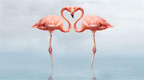 flamingo wallpapers  background images stmednet
