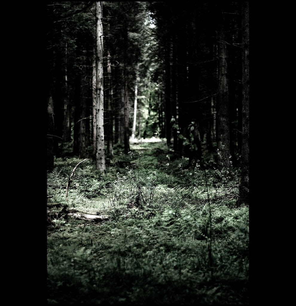 Schwarzwald dark trees