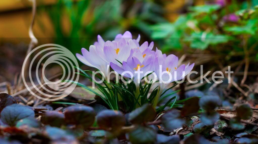 spring flowers photo: Spring Flowers Spring_Flowers_1366x768HDTV.jpg