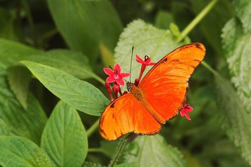 oranje vlinder in hortus botanicus