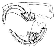 Dessin d'un crane en coupe longitudinale