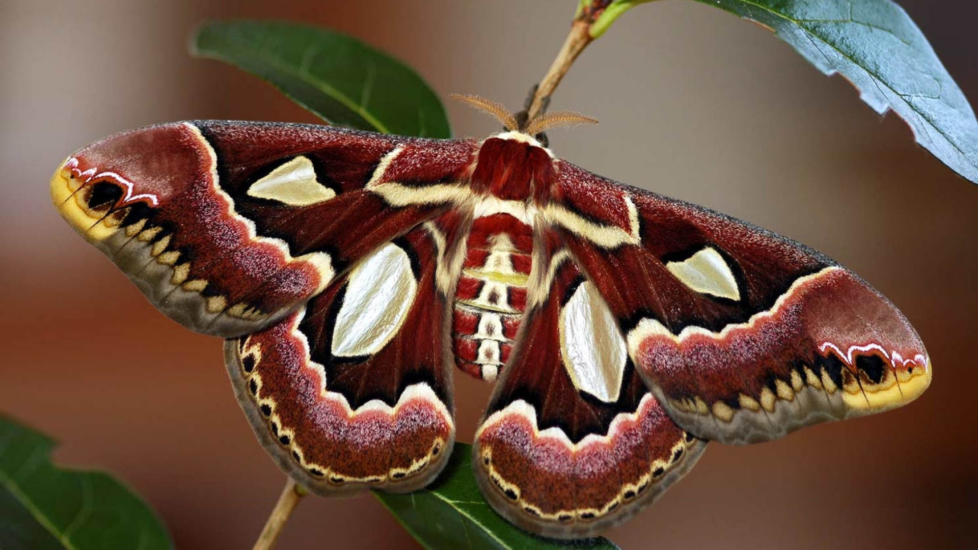 Download Wallpaper 1920x1080 butterfly, wings, colorful ...