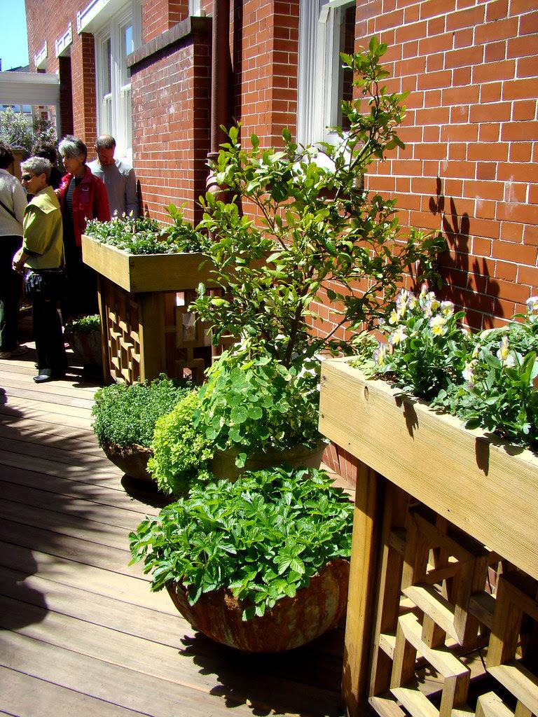 DSC05720 SF Decorator Showcase kitchen garden