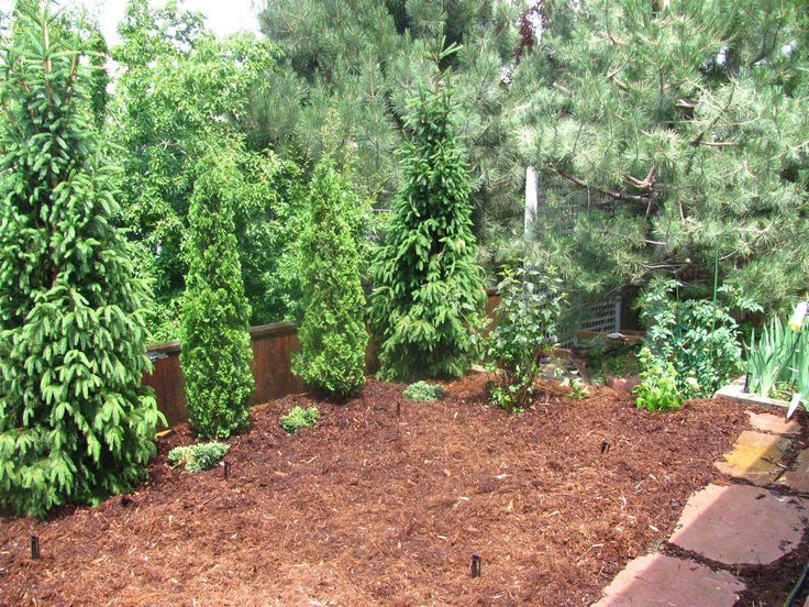 Evergreen Trees Landscaping Privacy Ideas