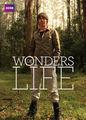 Wonders of Life | filmes-netflix.blogspot.com.br