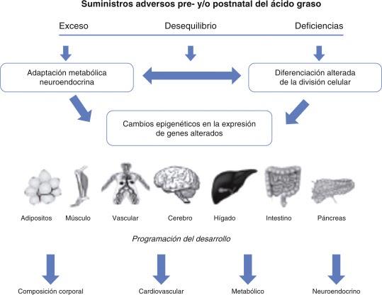 Ideas fórmulas y accesos directos para Metabolismo y nutricion