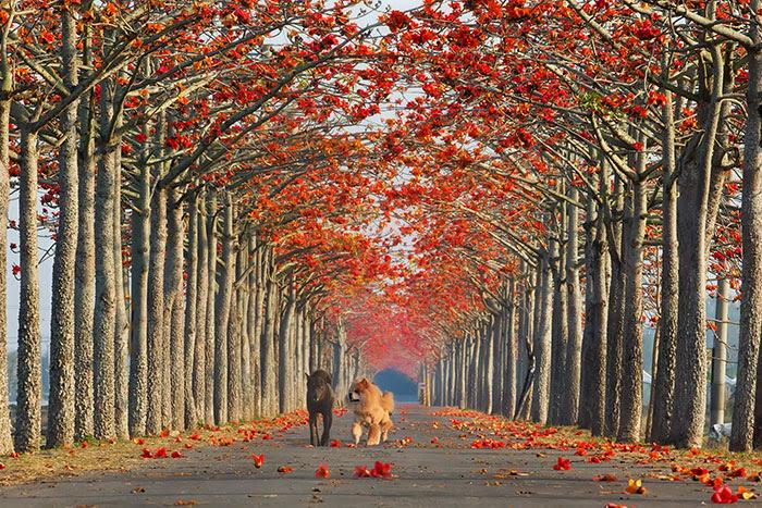 calles-arboles-flores (2)
