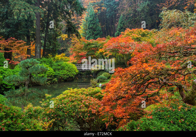japanese gardens in autumn in portland oregon usa e72mck