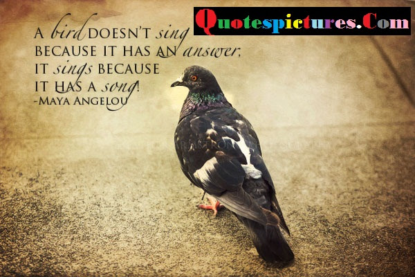 Birds Quotes A Bird Does Not Sing Because It Has An Answer By Maya