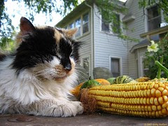 Puss and Produce