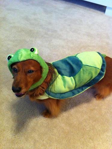 Super Ninja Turtle Lulu