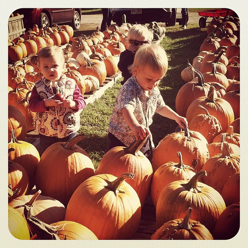 Quinn checking out the big pumpkins.