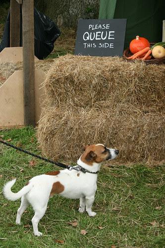 Dog queuing