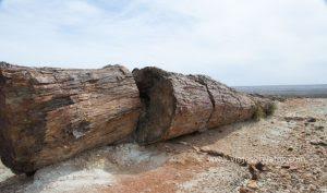 bosque-petrificado-en-patagonia-1024x605