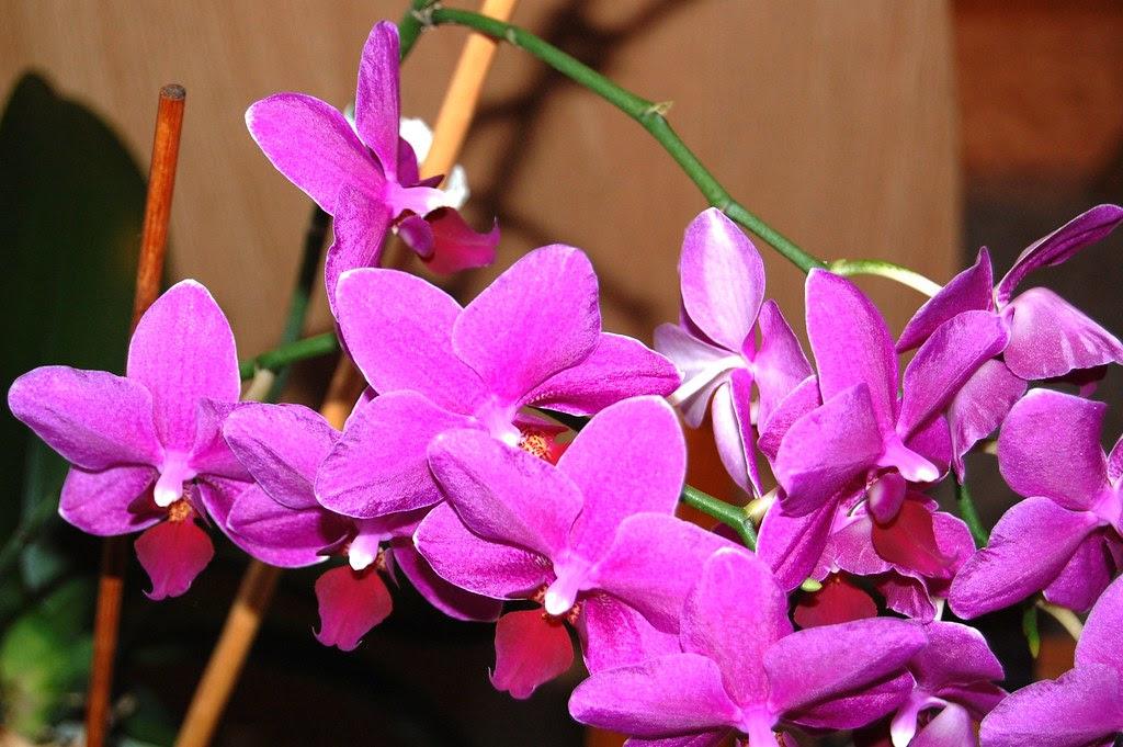 DSC_0083 Orquídeas