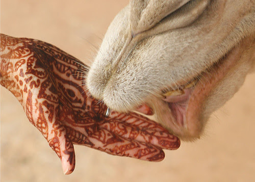 800px-Mehndi_on_hand_with_camel