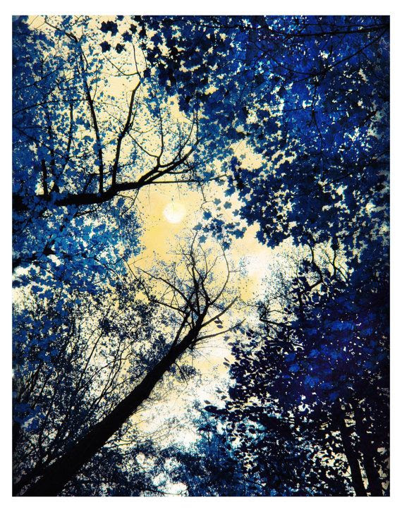 China blue, 11x14, Fine Art photograph, nature, landscape, tree art, navy blue decor, delft blue, moon art