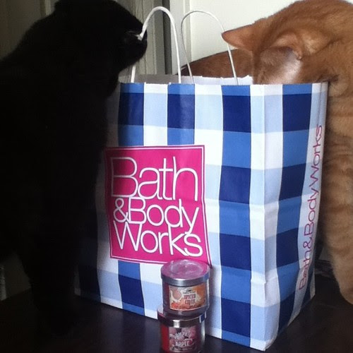 The cats seem pleased with my Bath and Body Works purchases! #bathandbodyworks #pumpkineverything #apple #candleaddiction