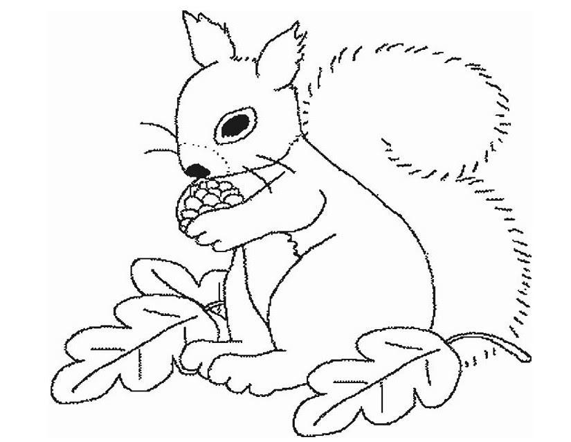 67 Dessins De Coloriage écureuil à Imprimer Sur Laguerchecom Page 5