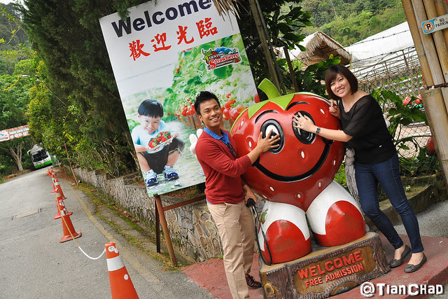 Genting Strawberry Farm with Flower and Mushroom