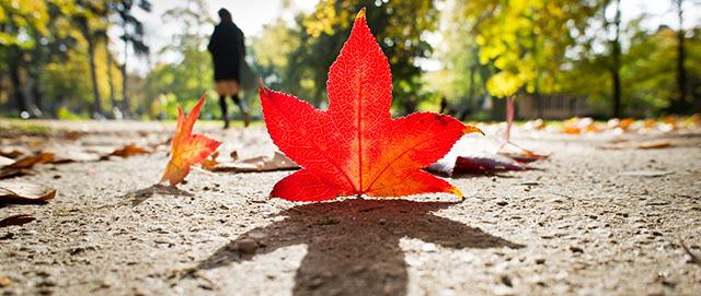 equinozio-d-autunno