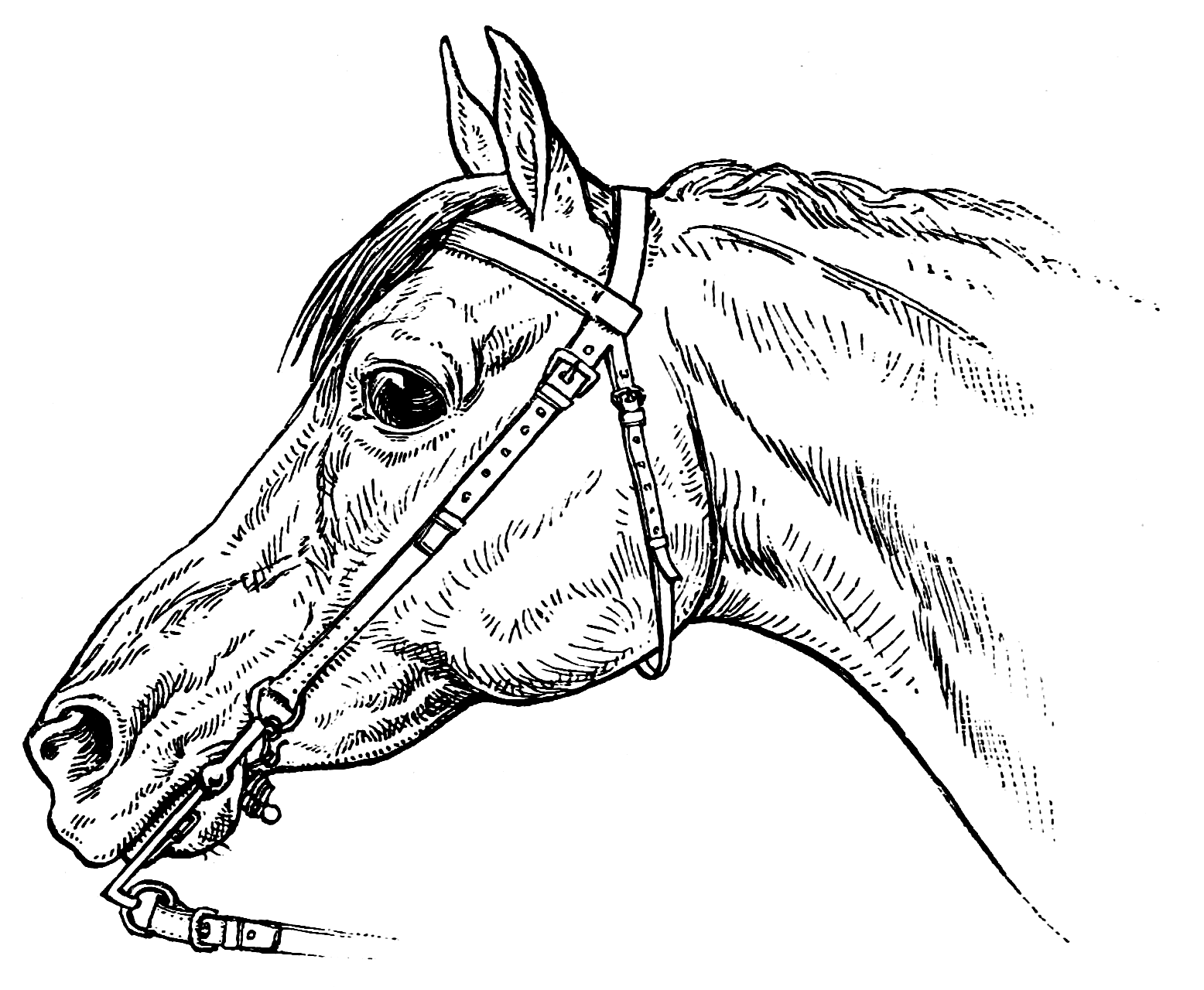 Coloring Pages - Horsemanship For Women | The Equinest