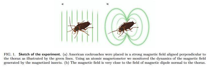 cucarachas en campo magnetico