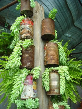 reuse cans as planters - mount on pole for vertical greenery