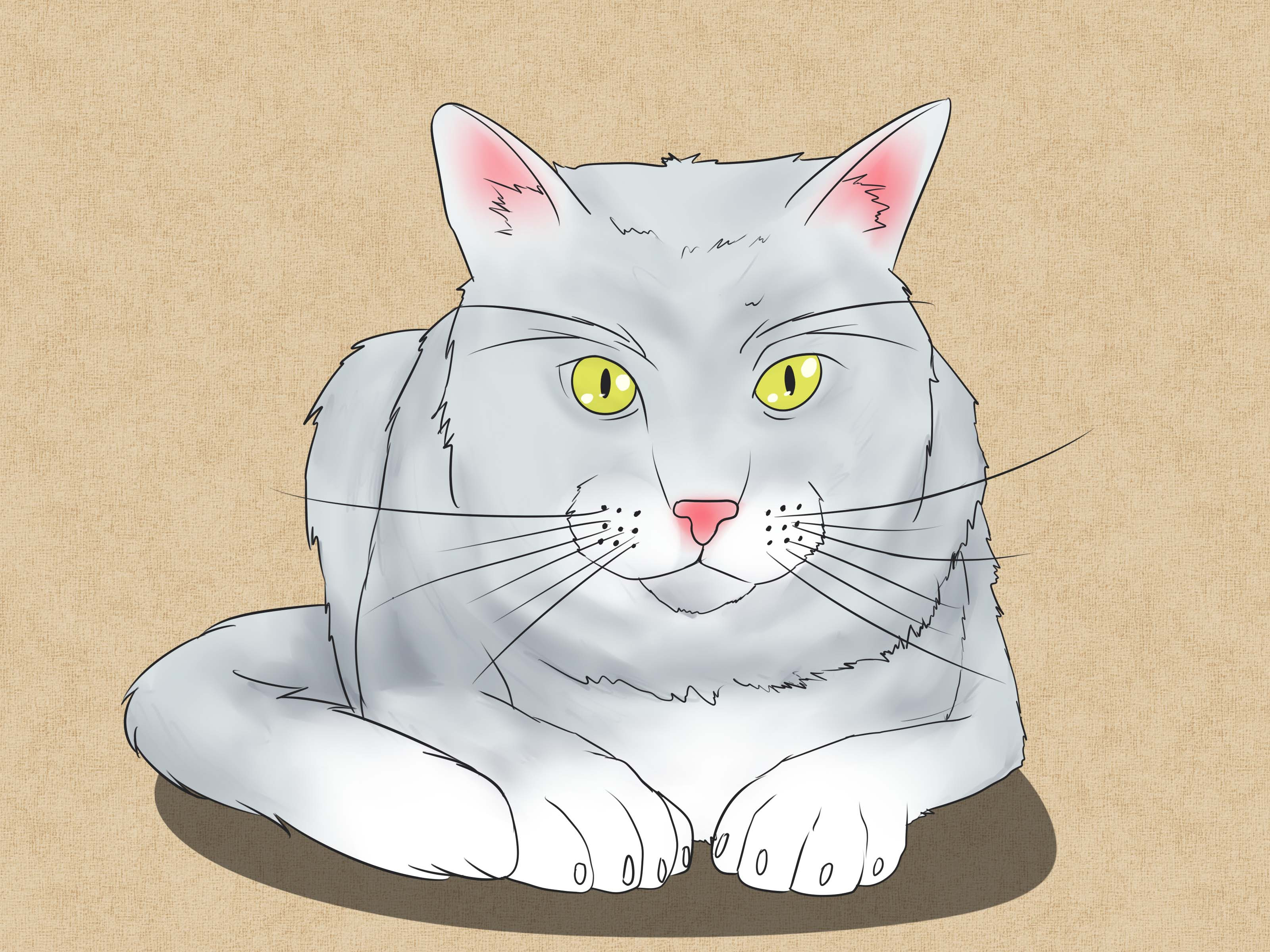 The 4 Best Ways to Draw a Cat - wikiHow