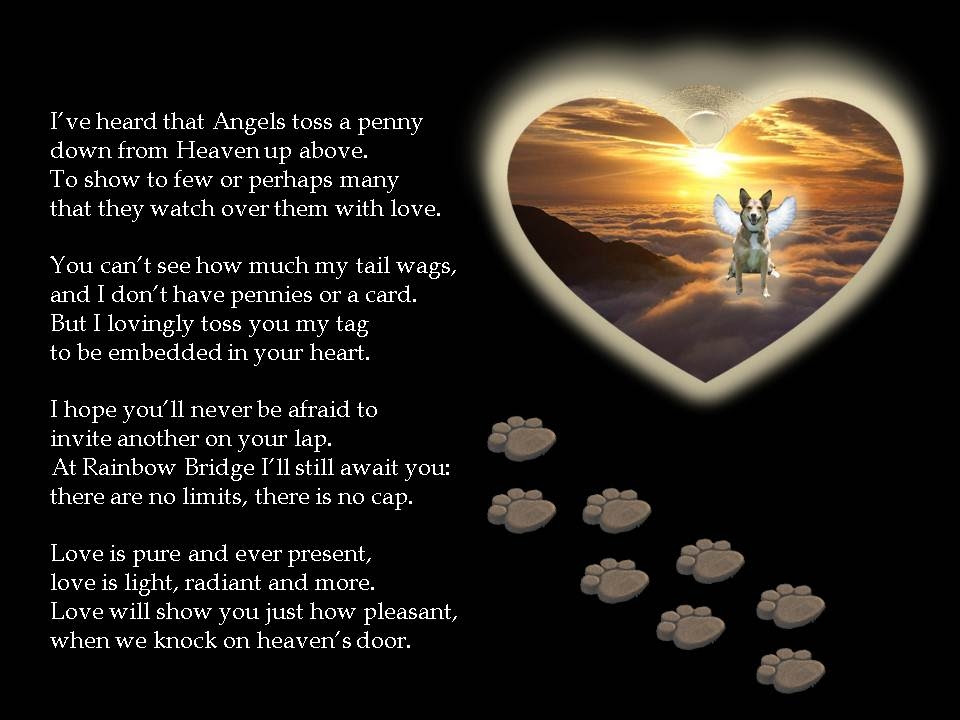 A Tag From Heaven Dog Poem Pictures Photos And Images For